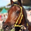 Qld horse &#8216;Shoot Out&#8217; still firing for spring