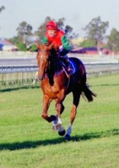 Larry Olsen aboard Kensei the 1987 Melbourne Cup winner. Source: Ross Stevenson, with permission
